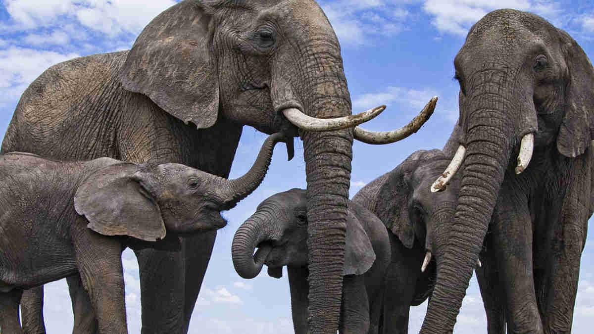 Hoy es Día Mundial del Elefante 🐘 - Chismes Today
